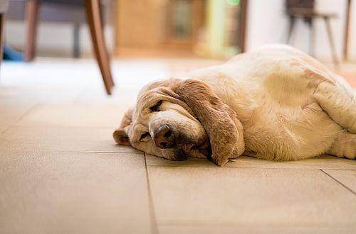 Ob Haushund Karin wohl auch davon träumt, einmal in unseren bequemen Gästebetten zu schlafen...?