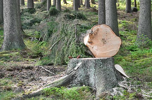 Lunar Wood: Could there be any truth to old forest traditions?